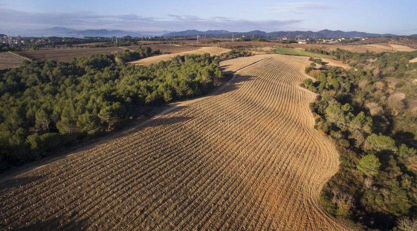 Cellers Torres planta 25.000 arbres per capturar i emmagatzemar emissions de CO2