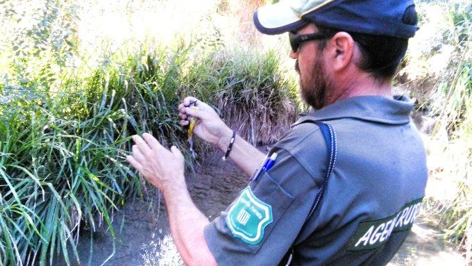 Els Agents Rurals enxampen dos furtius a Sant Quintí de Mediona que caçaven ocells