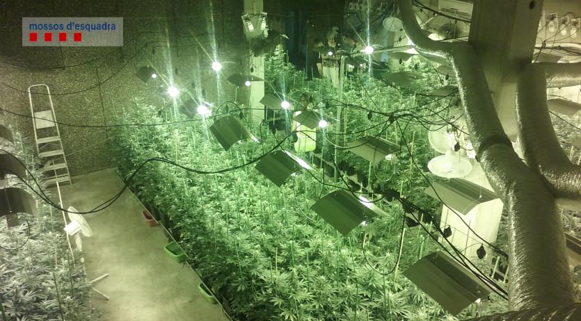 Un detingut per cultivar marihuana en una nau industrial de Sant Cugat Sesgarrigues