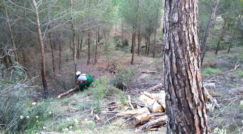 La regidoria de Medi Ambient i l'ADF Sant Sadurní fan treballs forestals a Can Mas de la Riera