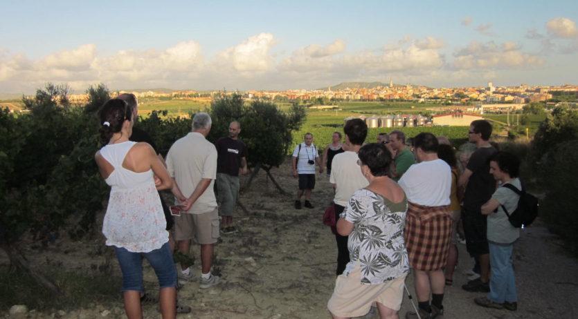 Aquest dissabte es podrà fer un itinerari guiat entre vinyes a Sant Pau