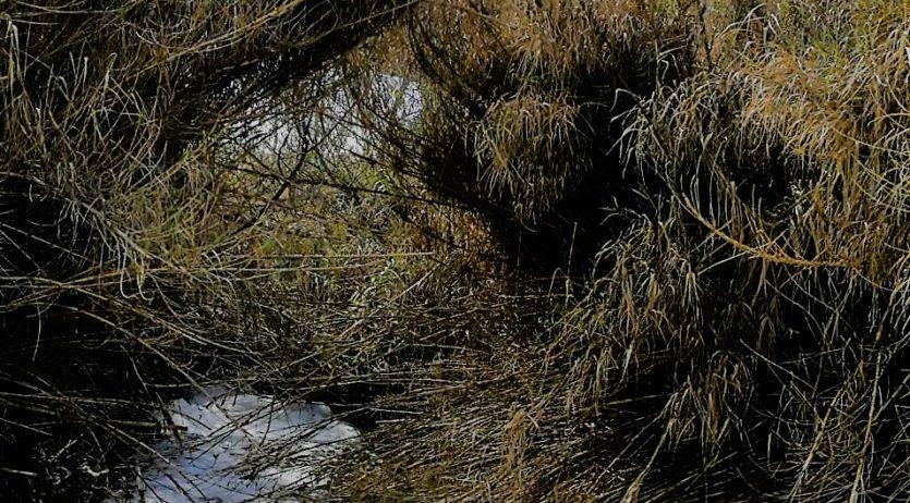 El passat cap de setmana el riu Foix va patir un nou episodi de contaminació