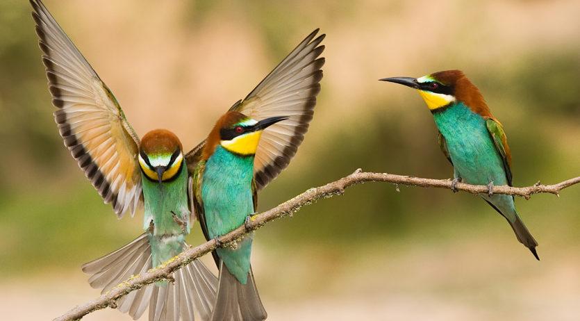 El vilafranquí Raimon Santacatalina exposarà fotografies de natura a la sala DPas