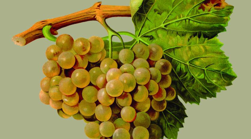 """Presenten el llibre """"Raïms. Les principals varietats catalanes: història, cultiu i vins"""""""