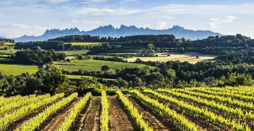 Prescriptors vinícoles visitaran el Penedès el mes de març de la mà de Qalidès i la D.O Penedès