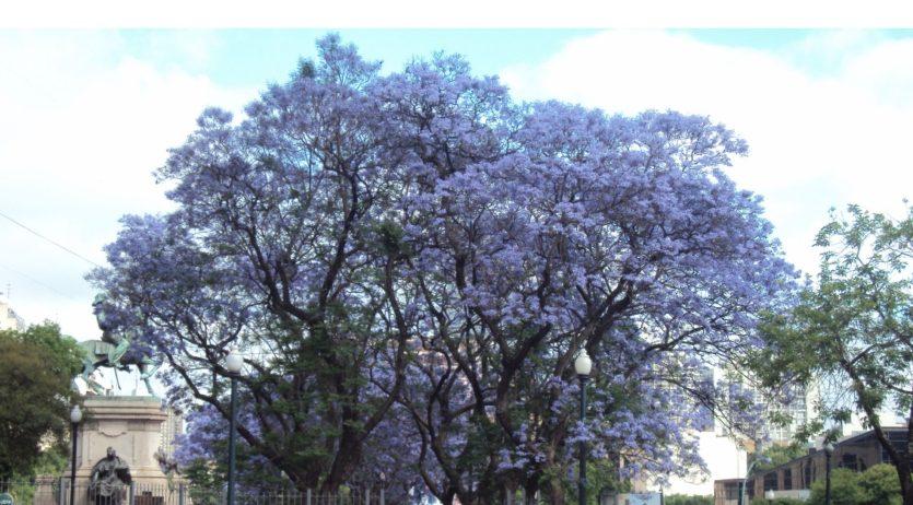 L'Ateneu Gelidenc organitza una xerrada sobre els beneficis dels arbres en entorns urbans