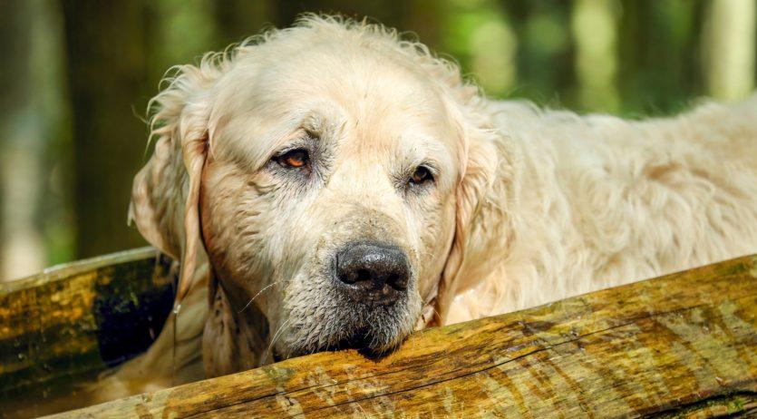 La Mancomunitat Penedès-Garraf llança una campanya contra l'abandonament animal