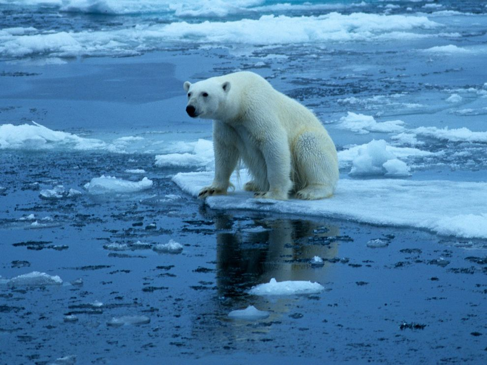 Per combatre el canvi climàtic…