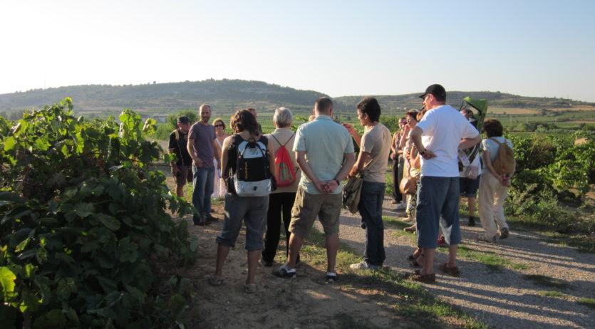 S'organitza un nou itinerari guiat entre vinyes a Sant Pau