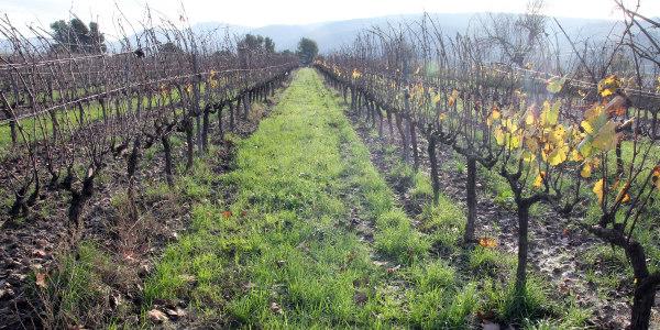 Es convoca una nova edició del Concurs 'Idees innovadores pel Canvi Climàtic i viticultura'