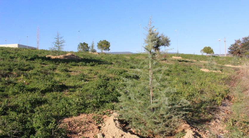 L'Ajuntament de Sant Martí replanta els arbres de Nadal de la campanya dels comerços