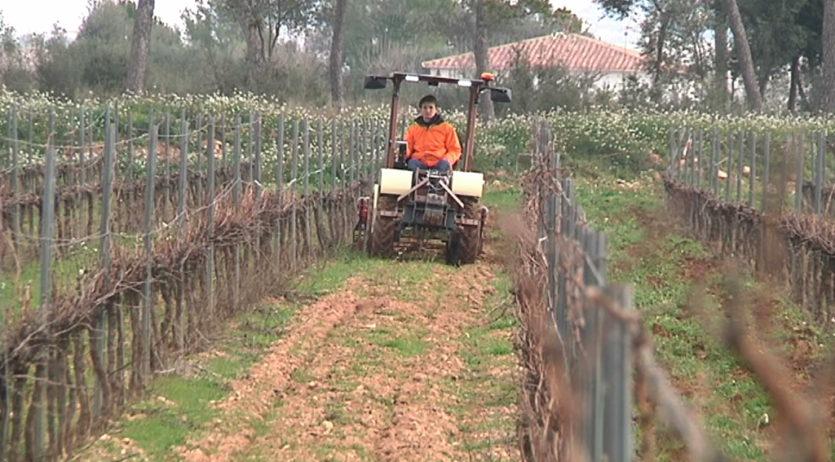 El sector vitivinícola acorda l'impuls de mesures urgents per a reduir els efectes del Covid-19