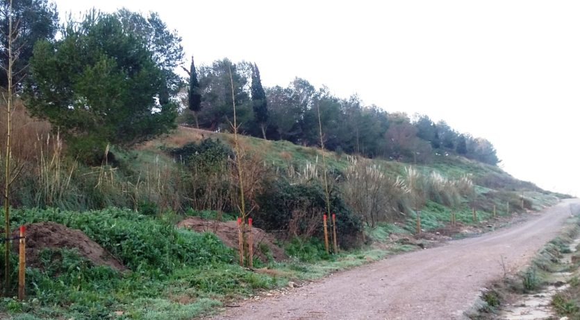 L'Ajuntament de Vilafranca i la Mancomunitat signen un conveni per a la plantació d'arbrat