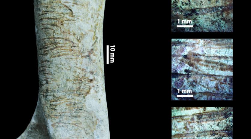 Un estudi posa al descobert un espai utilitzat com a corral a Font de la Canya fa 2.600 anys