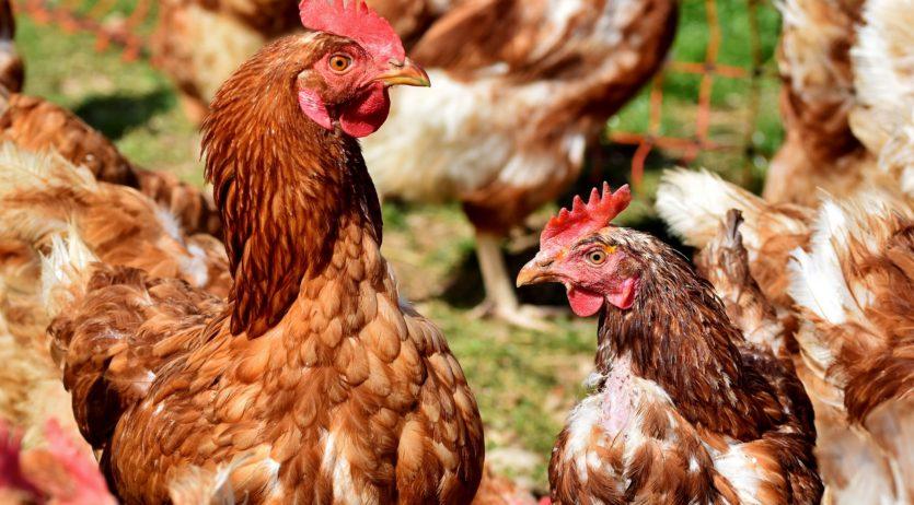 Agricultura convoca 1,5 M€ en ajuts per liquiditat d'explotacions afectades per la COVID19
