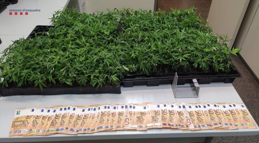 Ingressen a presó tres homes que transportaven 5 kg de cabdells de marihuana a l'Alt Penedès