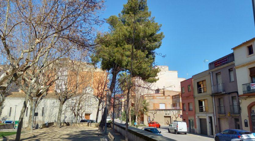 Dilluns s'eliminarà un exemplar de pi blanc al parc Tívoli pel risc de trencament i caiguda