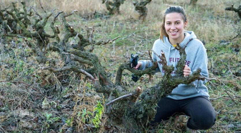 L'Alt Penedès és la comarca barcelonina amb més superfície dedicada a l'agricultura ecològica