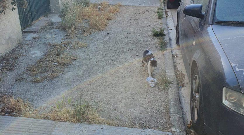 Des de fa uns dies que estan apareixent a Castellet i la Gornal gats enverinats o maltractats