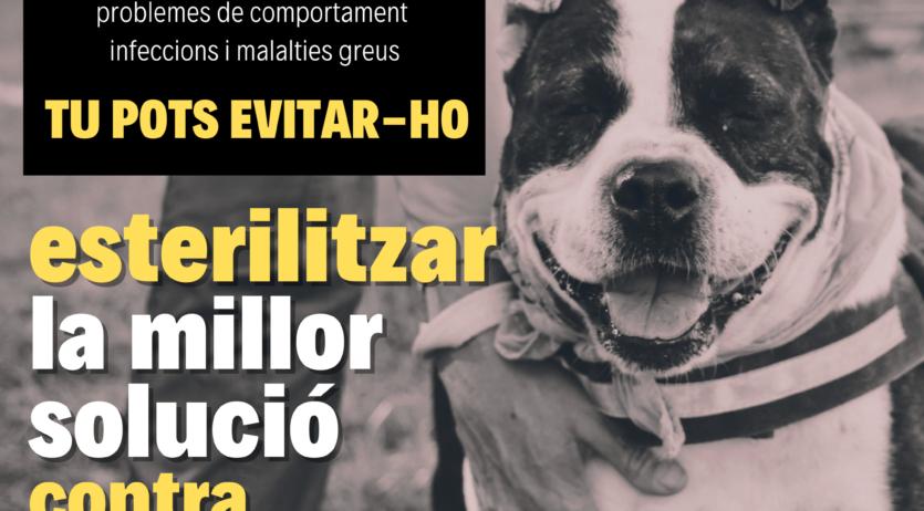 Comença una campanya per fomentar l'esterilització dels animals de companyia