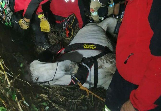 Rescatat un cavall que havia quedat atrapat en un torrent durant gairebé 24 hores